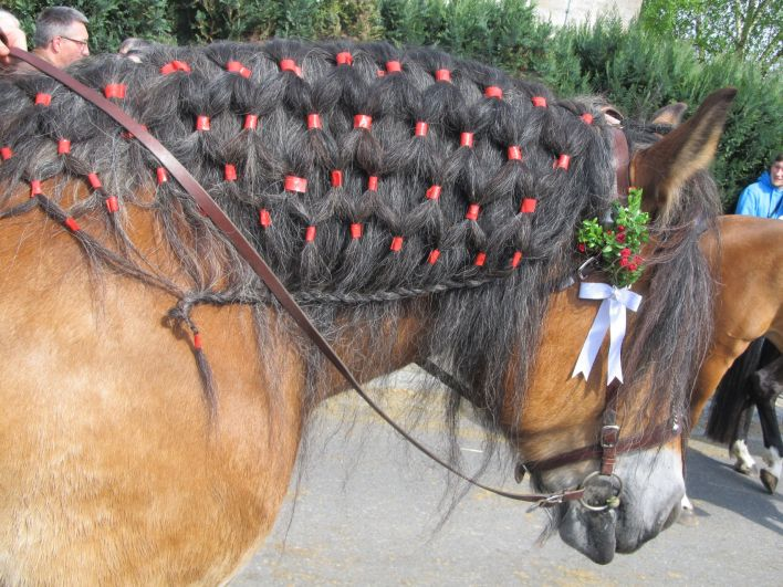 Krk koně