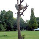 Giuseppe Penone, Idee di pietra, 2010, bronz, 830 x 250 x 220 cm